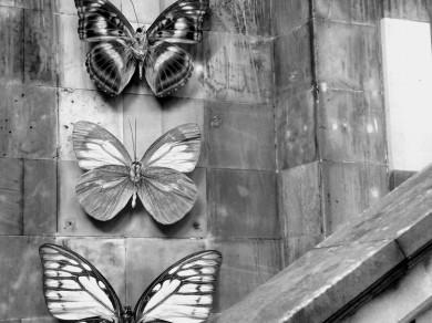 Mari Mahr: Two Walk in Edinburgh 06